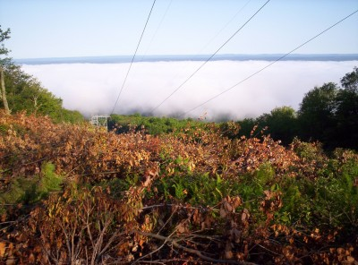 Early morning near a power line clear-cut, across a valley of fog