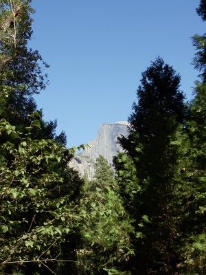 Half Dome again, through some trees
