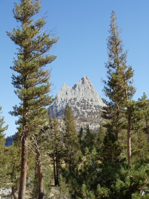 Cathedral Peak framed by trees