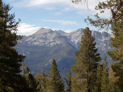 Mountains in the distance, framed by pine trees