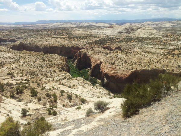 This arid, rugged Utah landscape nonetheless has a smattering of green scrub, and a canyon in the distance shelters trees and bushes